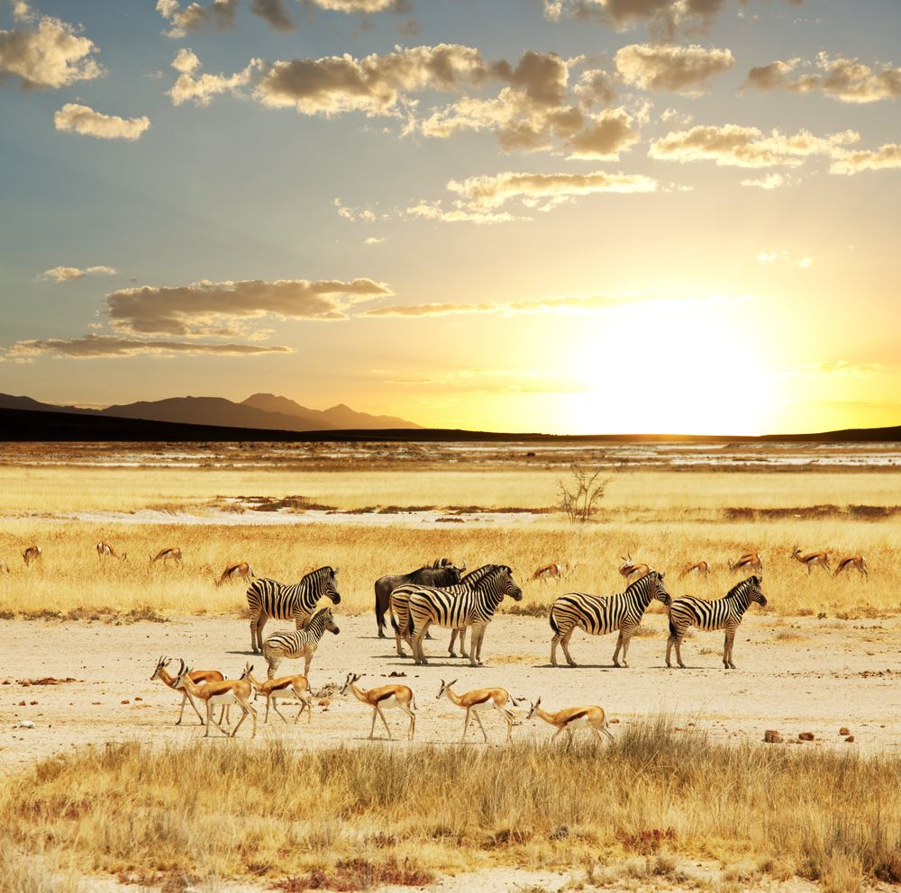 How to Plan a Hunting Safari to South Africa